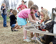 Cornwall, New York  - Dairy goats and children at Edgwick Farm in Cornwall on April 15, 2012. The farm uses milk from the goats to produce artisan cheese.