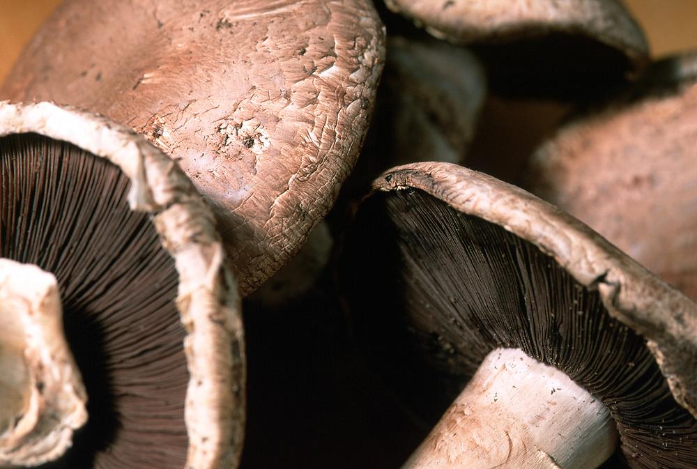 Close up selective focus photo of Portobello mushrooms