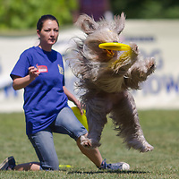 Krisztina Ozdi of Hungary competes with her dog Chocko during the Flydogs Extreme Distance Frisbee European Championships held in  Budapest, Hungary. Saturday, 16. June 2012. ATTILA VOLGYI