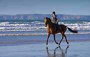 Young woman rides Cleveland Bay cross Thoroughbred horse on Broad Haven Beach, Pembrokeshire, Wales