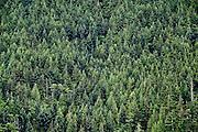 Boreal forest , British Columbia, Canada