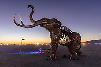 The Monumental Mammoth at Dawn<br /> by: Girl Scout Gold Award Recipient Tahoe Mack, Mentor and Protector of Tule Springs Representative Sherri Grotheer, and artists Luis Varela-Rico and Dana Albany<br /> from: Las Vegas, NV<br /> year: 2019<br /> <br /> The Monumental Mammoth project will depict a life-sized steel Colombian mammoth skeleton collaged with metal found objects to tell the story of Tule Spring National Monument's past, present, and future. The sheer size and struggle of the mammoth's stance is a representation of the universal call to protect what the earth has given humanity. As a community, we are called together to protect the fossils of our past and the education of our future. Dana Albany and Luis Varela-Rico are pulling together the sleek elements of the interior steel structure and the intricate weavings to represents the distinctive community that is Las Vegas.It also tells the story of a rising feminine power, and shows all women of any age that anything is possible!<br /> <br /> URL: https://tulemammothproject.wordpress.com<br /> Contact: tulemammothproject@gmail.com<br /> <br /> https://burningman.org/event/brc/2019-art-installations/?yyyy=&artType=H#a2I0V000001AVtMUAW My Burning Man 2019 Photos:<br /> https://Duncan.co/Burning-Man-2019<br /> <br /> My Burning Man 2018 Photos:<br /> https://Duncan.co/Burning-Man-2018<br /> <br /> My Burning Man 2017 Photos:<br /> https://Duncan.co/Burning-Man-2017<br /> <br /> My Burning Man 2016 Photos:<br /> https://Duncan.co/Burning-Man-2016<br /> <br /> My Burning Man 2015 Photos:<br /> https://Duncan.co/Burning-Man-2015<br /> <br /> My Burning Man 2014 Photos:<br /> https://Duncan.co/Burning-Man-2014<br /> <br /> My Burning Man 2013 Photos:<br /> https://Duncan.co/Burning-Man-2013<br /> <br /> My Burning Man 2012 Photos:<br /> https://Duncan.co/Burning-Man-2012