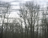 I captured this series from the train from Seattle to Portland. I love the stark beauty of trees in winter, and wanted the movement in the image to suggest the transitory nature of seasons.