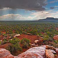 Cedar forests grow on Cedar Mesa in a part of southeastern Utah that was part of  Bears Ears National Monument before it was downsized by the Trump administration in 2017.
