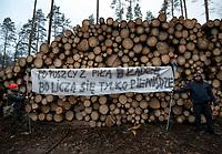 Postolowo, Puszcza Bialowieska, 30.12.2017. Zimowy Spacer Obywatelski w Puszczy . Akcja zostala zorganizowana po tym , jak Nadlesnictwo Hajnowka zamknelo dla turystow kolejne obszary lesne . Protestujacy uwazaja , ze przyczyni sie do zmniejszenia zainteresowania Puszcza turystow a tym samym po raz kolejny oslabi branze turystyczna w regionie Puszczy Bialowieskiej N/z uczestnicy marszu przy pniach scietego drewna przygotowanego do wywozki fot Michal Kosc / AGENCJA WSCHOD