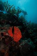 diver in bonaire next to orange sponge