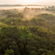 Forest cover, Leuser Ecosystem, Sumatra, Indonesia. The Leuser Ecosystem is home to the largest extent of intact forest landscapes remaining in Sumatra and it is among the most biologically abundant landscapes ever described. Photo: Paul Hilton for Earth Tree Images