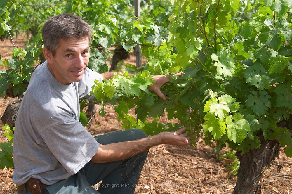 Philippe Michel, Maitre de Chais, cellar master. Domaine du Mas de Daumas Gassac. in Aniane. Languedoc. Vine leaves. Old, gnarled and twisting vine. France. Europe. Vineyard.