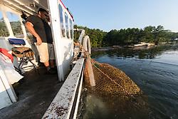 Leroy Gilbert Harvesting Rockweed