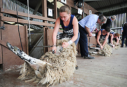 © Licensed to London News Pictures. <br /> 08/07/2014. <br /> <br /> Harrogate, United Kingdom<br /> <br /> Anna Hall, 18 from Malton takes part in a sheep shearing heat on the first day of the Great Yorkshire Show. The show is England's Premier Agricultural Event and is based on the 250-acre Great Yorkshire Showground near Harrogate. The Main Ring is the hub of the Show providing a setting for international show jumping and world class cattle parade. The showground is filled with animals, country demonstrations, have-a-go activities and rural crafts.<br /> <br /> Photo credit : Ian Forsyth/LNP