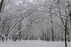 Corversbos snow, sneeuw, winter, cold, wit, white