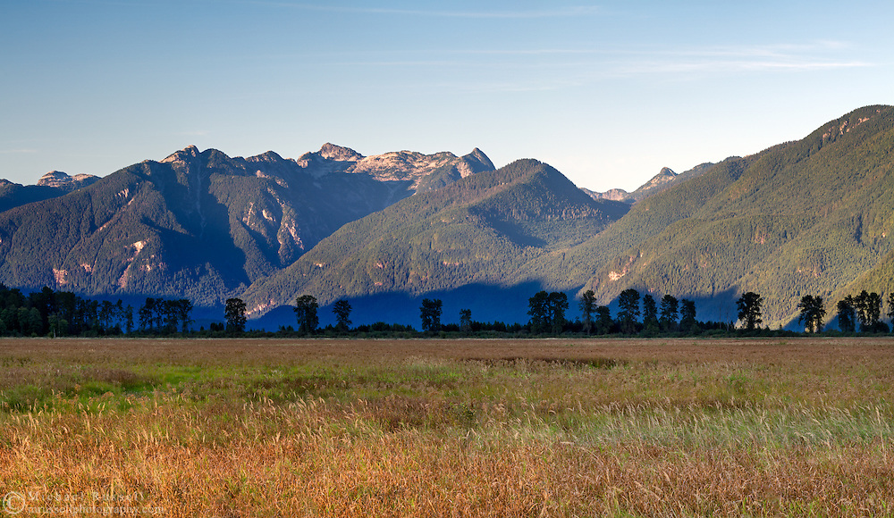 Osprey Mountain and the grasses in Pitt Marsh in Pitt Meadows, British Columbia, Canada