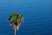 One Palm tree against blue water of the Adriatic Sea. Island of Korcula, Croatia