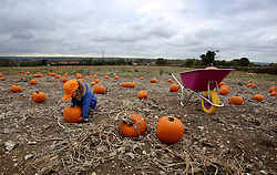 NOTE: PARENTAL PERMISSION GIVEN Oscar Nolan, two, selects his pumpkin for Halloween at the Pumpkin Moon site in Maidstone, Kent, prior to Halloween celebrations at the end of the month.
