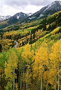 Aspens light up the hillside near McClure Pass, Elk Mountains of Colorado.