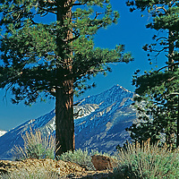 Sagebrush & Jeffrey pines frame Mount Tom, above California's Owens Valley.