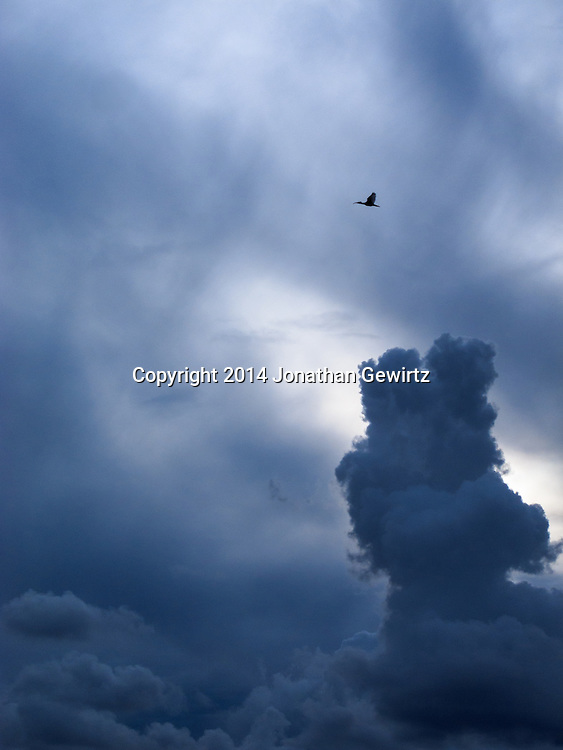 A solitary ibis flies past dramatic low clouds on a stormy Florida afternoon.<br /> <br /> WATERMARKS WILL NOT APPEAR ON PRINTS OR LICENSED IMAGES.