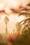 Palm trees at Christian cemetery in Casablanca, Morocco.  The Cimetière el-Hank