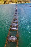 Greenshell Mussell Cruise, Kenepuru Sound, Marlborough, South Island, New Zealand