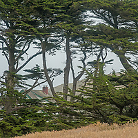 Cypress trees surround the historic Point Reyes Lifeboat Station at Point Reyes National Seashore in California.