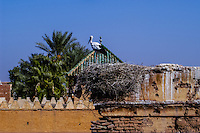 Morocco. Marrakesh medina in the area known as Kasbah. Stork nesting above Place Yazid.