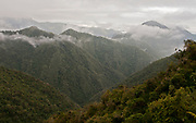 Yanacocha cloud forest in Ecuador, altitude about 3500 meters.