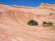A striking view of layered sandstone near Zebra Slot, along Harris Wash, Grand Staircase-Escalante National Monument, near Escalante, Utah.