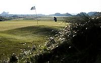 TEXEL - De Cocksdorp.  -  helmgras op hole 18. Golfbaan De Texelse. COPYRIGHT KOEN SUYK