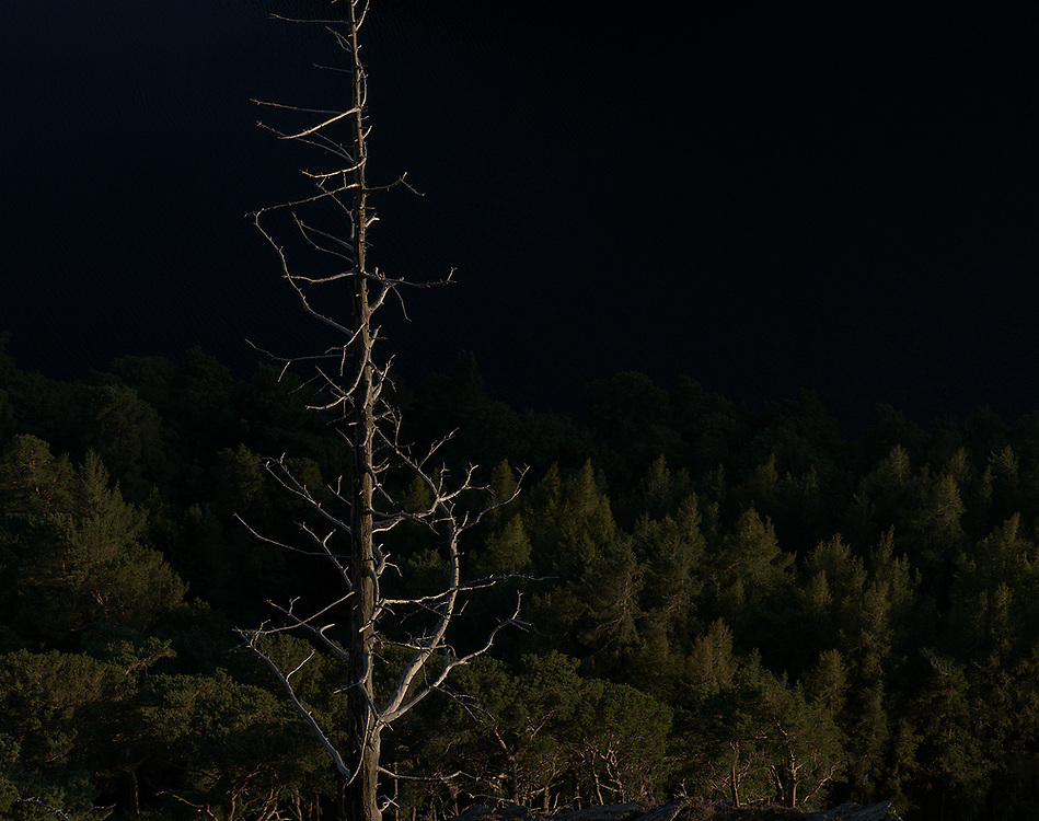 A lone dead tree against the evening light makes a nice composition.