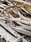 Driftwood along the shore of Kintla Lake, Glacier National Park, Montana