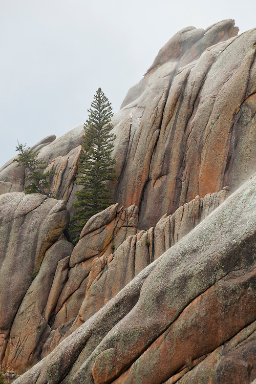 Granite rock formations and pine trees along the McCurdy Park Trail, Lost Creek Wilderness, Colorado.