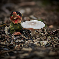 Happy Troll guarding his Mushroom. Composite of 50 focus stacked images taken with a Nikon D850 camera and 105 mm f/1.4 lens (ISO 64, 105 mm, f/1.8, 1/2500 sec). Raw images processed with Capture One Pro Helicon Focus (method C, smoothing, 4).