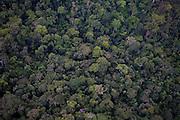 Parauapebas_PA, Brasil...Vegetacao da floresta Nacional dos Carajas, Para..Carajas National Forest Vegetation, Para..Foto: JOAO MARCOS ROSA / NITRO