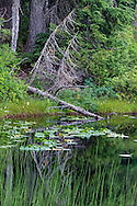 A fallen tree on the shore of Flower Lake at Mount Seymour Provincial Park in North Vancouver, British Columbia, Canada