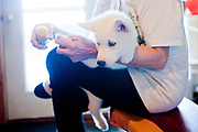 Nick Arnold getting his new Siberian Husky puppy to be raised as a service dog