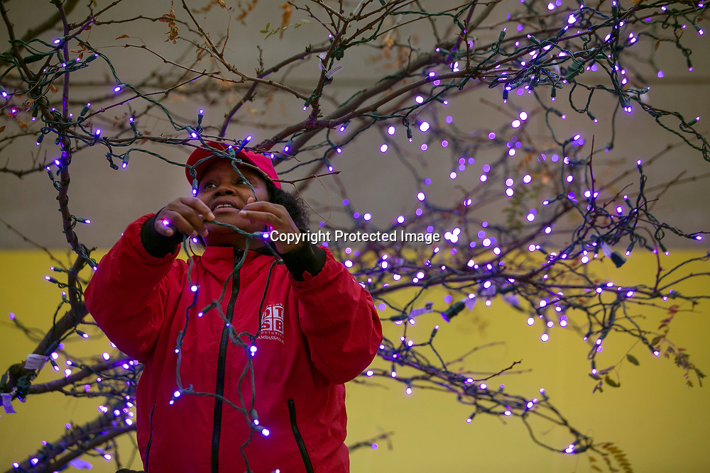 Angel Scott strings up a tree with purple colored lights as she helps get downtown South Bend ready for the holidays.<br /> Tribune Photo/SANTIAGO FLORES