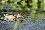 Acadia Wildlife Sanctuary Easthampton,MA