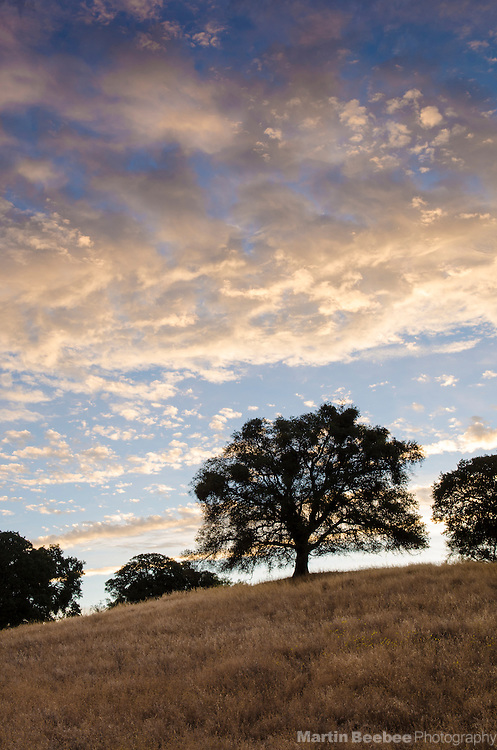 Oak trees and clouds at sunrise, El Dorado County, California