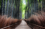 The Sagano Bamboo Forest, is an amazing forest of bamboo located in Kyoto, Japan. It was built in the 14th century by a shogun in honor of the passing of Japan's emperor, Tenryu-ji.