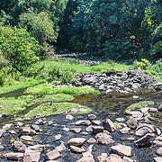 A creek at Lake Manyara National Park in northern Tanzania.