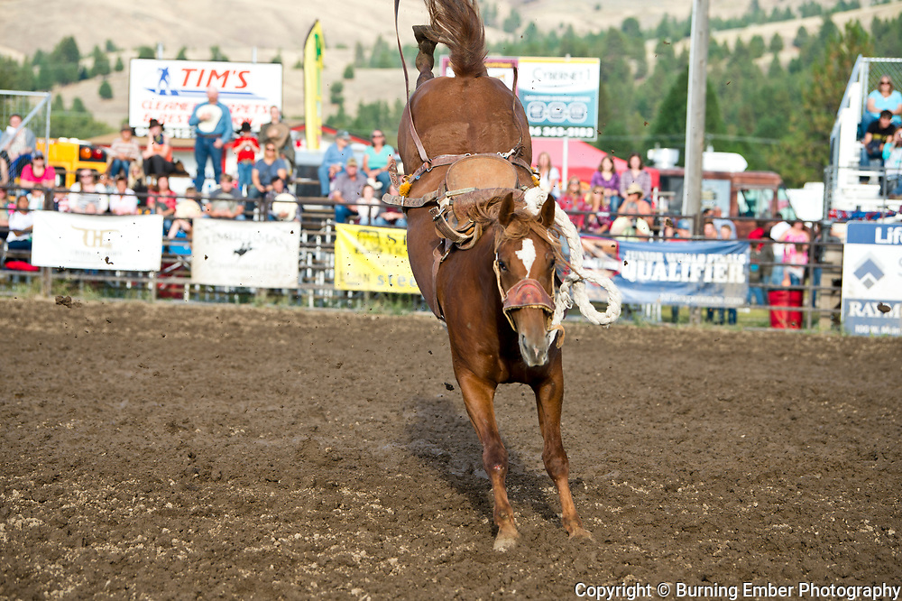 Joe Reynolds memorial bucking horse at the Darby Broncs N Bulls event Sept 7th 2019.  Photo by Josh Homer/Burning Ember Photography.  Photo credit must be given on all uses.
