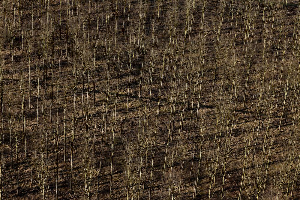Nederland, Betuwe, Gemeente Geldermalsen, 07-03-2010; Beesd, Lage Veld. Jonge aanplant van bomen..luchtfoto (toeslag), aerial photo (additional fee required).foto/photo Siebe Swart