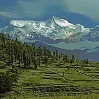 Crops in Nepal's Pokara Valley grow in terraced fields below Annapurna IV & II.