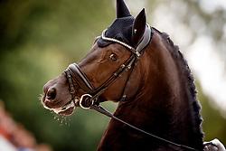 Cornelissen Adelinde, NED, Governor Str<br /> Longines FEI/WBFSH World Breeding Dressage Championships for Young Horses - Ermelo 2017<br /> © Hippo Foto - Dirk Caremans<br /> 04/08/2017