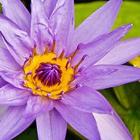 The National Botanical Garden of Belgium Flower Stock Photos