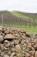 Vingården Antica Terra med stenrik odlingsjord, Dundee i Oregon, USA