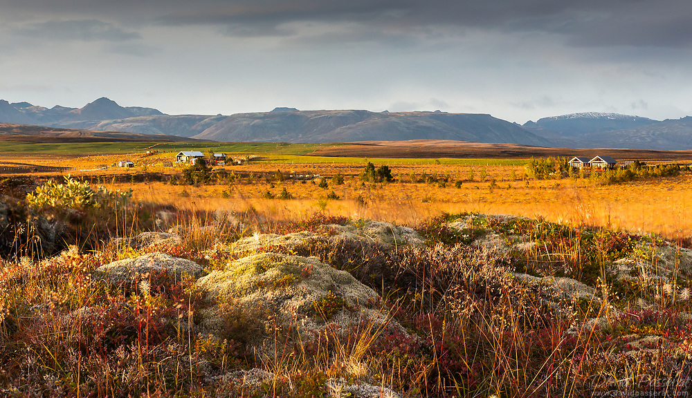 Field in Iceland
