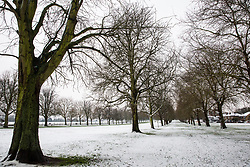 Windsor, UK.1st February, 2019. An overnight snowfall alongside the Long Walk in Windsor Great Park. More snow is expected to fall during the morning in Berkshire and scores of schools will remain closed for the day.