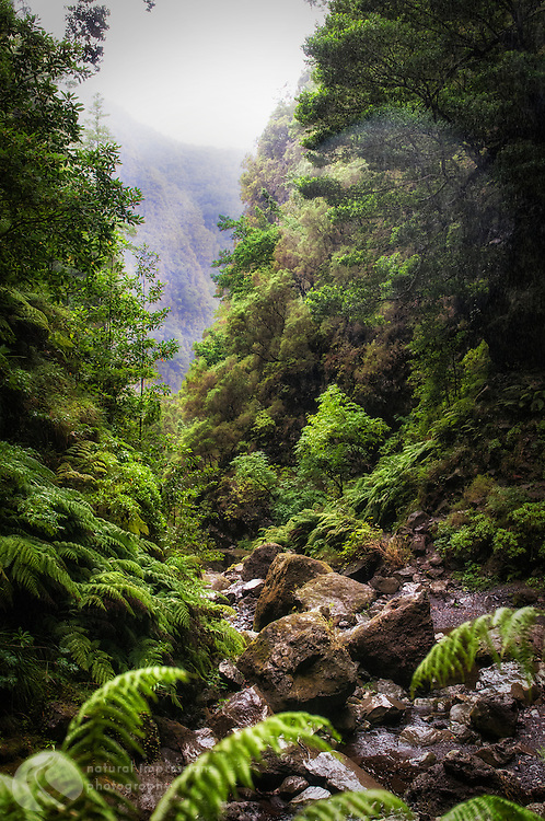Madeira Island, only trails along levadas, no roads into these remote canyons.