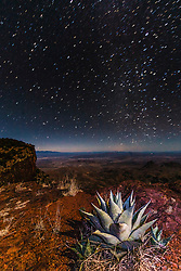 Agave and stars on South Rim of Chisos Mountains into Mexico, Big Bend National Park, Texas, USA.